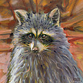 Racoon by Donald Maier