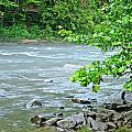 Raging River by David  Brown