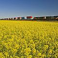 Rail Cars Carrying Containers Passe by Dave Reede