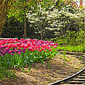 Railroad Beauties by Glenna Oliver