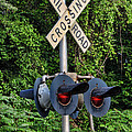 Railroad Crossing Light And Greenery by Kathy Clark