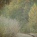 Rails Curve Into A Dreamy Autumn by Lisa Porier