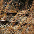 Rails Retired by Theresa Johnson