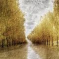 Rain by Diane Dugas