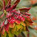Rain Drenched II by Beth Buelow