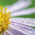 Rain Drop On Flower by Patipat Rintharasri