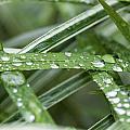 Rain Drops On Grasses by Rich Franco