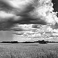 Rain Everglades by Bruce Bain