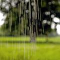 Rain Falling by Dr Keith Wheeler