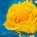 Rain On A Yellow Rose by Randall Branham