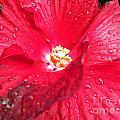 Rain On Red by Tisha Clinkenbeard