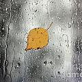 Rain On Window With Leaf by Simon Bratt Photography LRPS