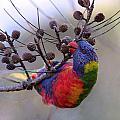 Rainbow At Play by Paul Svensen