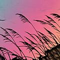 Rainbow Batik Sea Grass Gradient Silhouette by Kathy Clark