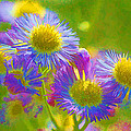 Rainbow Colored Weed Daisies by Kathy Clark