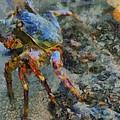 Rainbow Crab by Balram Panikkaserry
