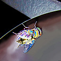 Rainbow Fly by Debbie Portwood