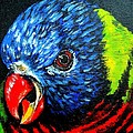Rainbow Lorikeet Look by Julie Brugh Riffey