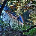 Rainbow Through The Rough by Michael Frank Jr