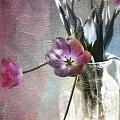 Rainbow Tulips by Linda Dunn