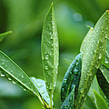 Raindrops by Michael Merry