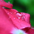 Raindrops On A Flower I by Gene Berkenbile