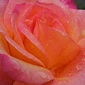 Raindrops On Roses Nine by Diana Hatcher