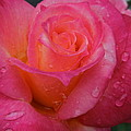 Raindrops On Roses Ten by Diana Hatcher