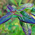 Raindrops On The Leaves by Judi Bagwell