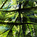 Rainforest Abstract by Bonnie Bruno