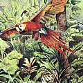 Rainforest by Adam Wallander