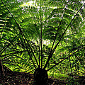 Rainforest Backlight by Kevin Smith