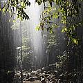 Rainforest, Bellingen, Australia by Paul Hobson