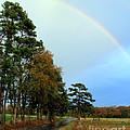 Rainy Day Rainbow by Kathy  White