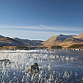 Rannoch Moor - Winter by Pat Speirs
