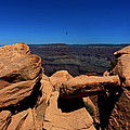 Raven Flying Near Ooh Aah Point by Julie Niemela