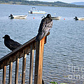 Raven On Watch by Roxann Whited