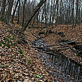 Ravine Creek by Susan Herber