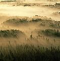 Rays Of Early Morning Sunlight Beam by Raymond Gehman