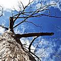 Reach The Sky by Tamar Toerien