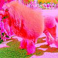 Really Pink Poodle by Randall Weidner