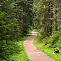 Recreation In Forest by Ursula Sander