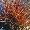 Red Air Plant by Jeanne Andrews