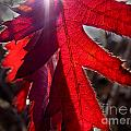 Red And Shadows by Blair Chaney
