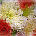 Red And White Mums Photoart by Debbie Portwood