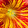 Red And Yellow by Ian Grainger