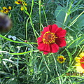 Red And Yellow Tiny Flowers by Tina M Wenger