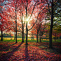 Red Autumn by Raf Winterpacht