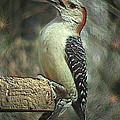 Red Bellied Woodpecker by Donna Brown