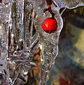 Red Berry In Icicle by James Hill